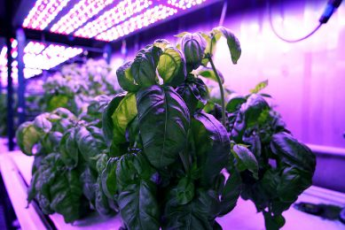Machine learning to optimise growth and taste of plants