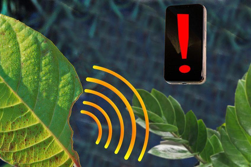 Nanosensor alerts smartphone when plants are stressed