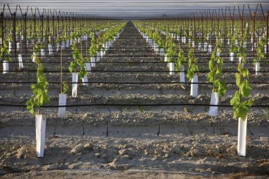 Drip irrigation system to precisely deliver pesticides to crops