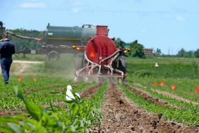 In Ontario, Canada, where the loss of soil organic-matter is a long-standing problem, cover crops and other cultivation strategies designed to improve soil structure are playing an increasingly important role in cropland sustainability.