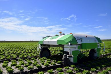 California dreamin : a French weeding robot in America