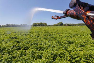stock haspel water sproeien beregenen grasland sproeiverbod grondwater verdamping droogte wateroverlast nat droog zomer Onttrekkingsverbod wolken Aardappelen loof aardappelveld