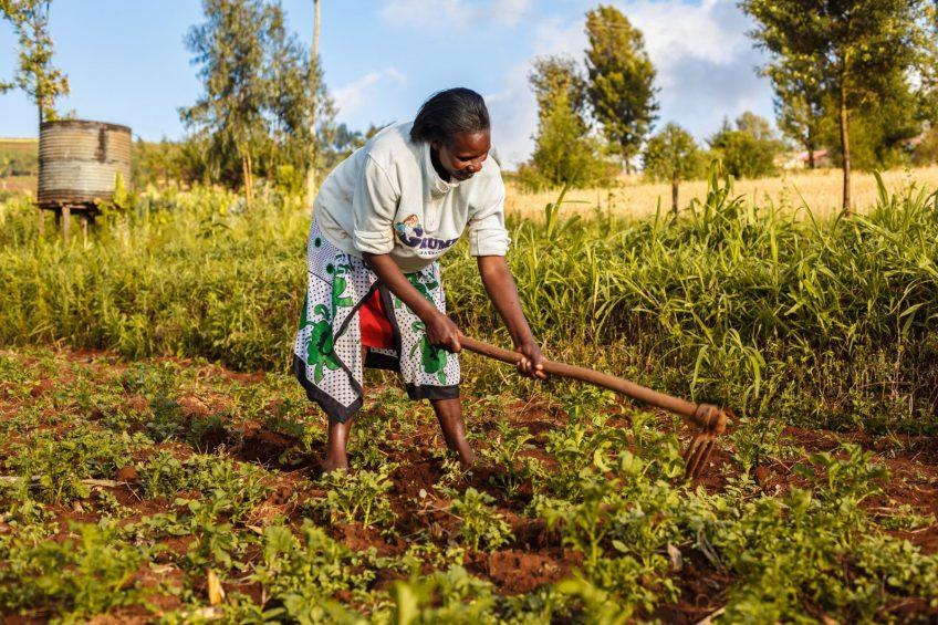 New alliance to unlock potential of smallholder farmers