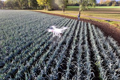 © Fotopersburo Bert Jansen TEL: +31(0)653703449 Onderwerp : drone boven prei 403686 (foto Bert Jansen) Fotograaf   : Bert Jansen Datum : 02-11-2016 Categorie : @2@  Trefwoorden : reed 403674