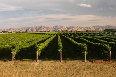 Photo: Pernod Ricard Winemakers