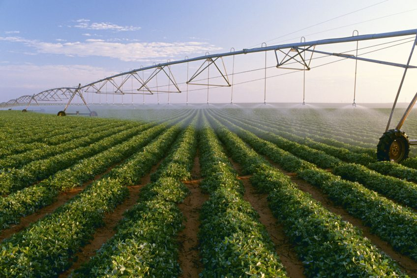 New FieldNET tool provides tailor-made irrigation scheduling