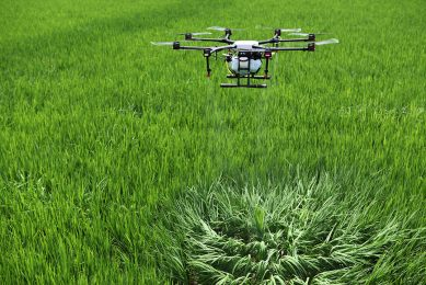 2017-07-12 05:31:05 This photo taken on July 12, 2017 shows a drone spraying pesticide above a rice field in Yongchuan, Sichuan province. Piloted from a distance, one drone can cover the same area as about 30 people and does the job more efficiently.
