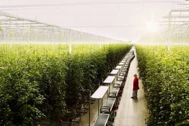 $ 5 million investment addresses automation needs in Canadian vegetable sector