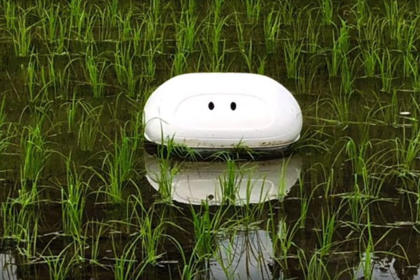 Nissan robot duck keeps paddy fields clear of weeds