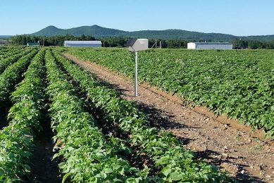 Solentum and Pessl partner up in potato precision ag