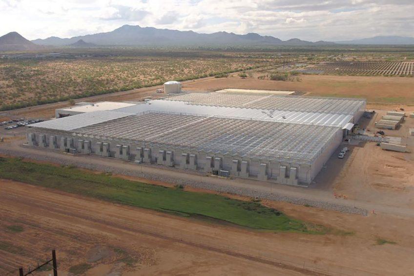 Der Standort der Züchtungsstation in der Wüste von Arizona garantiert eine größere Anzahl an warmen und hellen Tagen. -------- The Marana site features 7 acres (2.8 hectares) or 300,000 sq. ft (28,000 sq. meters) of greenhouses.