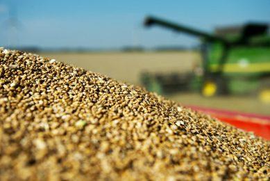 2012-08-15 15:29:29 BIDDINGHUIZEN - Een loonbedrijf in Flevoland is bezig met de graanoogst. Door onder meer de tegenvallende oogst in de Verenigde Staten is de graanprijs gestegen. Daarvan profiteren de boeren in Nederland, waar wel een goede oogst is. ANP ROBIN UTRECHT