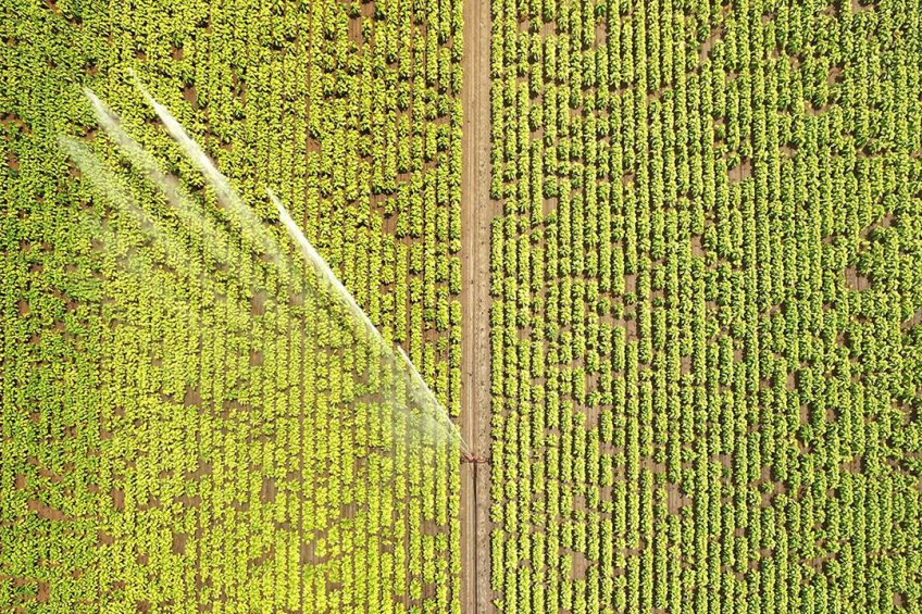 There is great potential for the use of AI and analytics in agriculture to improve plant health, soil productivity and crop yields. (Photo credit: North Carolina State University).