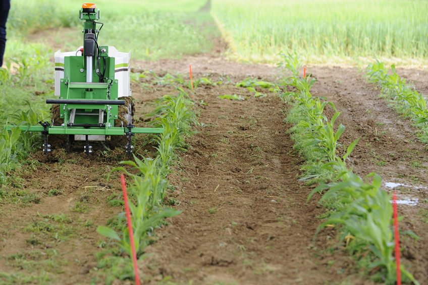 """2016-06-15 15:51:52 A weeding robot is pictured during a demonstration of new technologies """"Digifermes"""" (Digital farms) at the Arvalis farm, an applied agricultural research organisation dedicated to arable crops, on June 15, 2016 in Saint-Hilaire-en-Woevre, eastern France.  JEAN-CHRISTOPHE VERHAEGEN / AFP"""