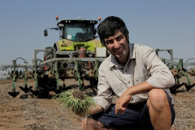 Weed Chipper: mechanical alternative for herbicides