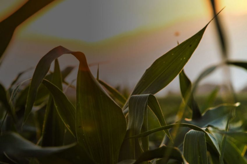 DTN acquires ClearAg to boost agronomic offerings