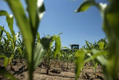 """2014-06-17 15:37:49 TO GO WITH AFP STORY BY JULIETTE MICHEL, US-FARM-COMMODITY-FOCUS (FILES) Andrew Isaacson drives a tractor in a corn field at the Little Bohemia Creek farm in this June 17, 2014, file photo, in Warwick, Maryland. US corn and soybean crops could break records in 2014, but for farmers the bounty has a dark side: falling prices and a logistics nightmare getting crops to market. """"It is not an exact science but when we look at the fields, it looks like it is going to be a big crop,""""  said John Reifsteck, a corn and soybean farmer in Champaign, Illinois, a Midwest """"farm belt"""" state. The US Department of Agriculture has forecast record crops this year for corn and soybeans, the two largest US crops in terms of production. Unless there is a devastating freeze or torrential rains before the harvest ends, corn production is projected at 366 million tonnes and soybean's at 106.5 million tonnes.    AFP PHOTO/Brendan SMIALOWSKI/FILES"""