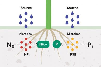 Increase yield by activating existing soil nutrients