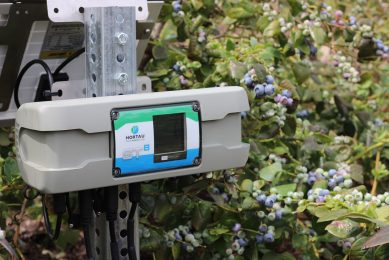 Hortau s technology in a blueberry field (CNW Group/Hortau)