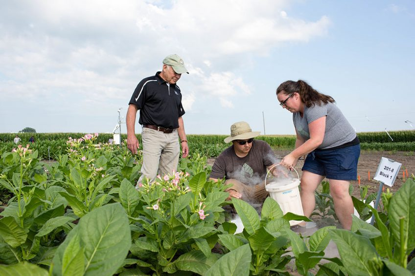 Scientists Don Ort (right), Paul South (center) and Amanda Cavanagh (left) study how well their plants modified to bypass photorespiration perform beside non-modified plants in real-world conditions. They found that plants engineered with a synthetic shortcut are about 40 percent more productive.