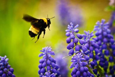 Bee-based disease prevention