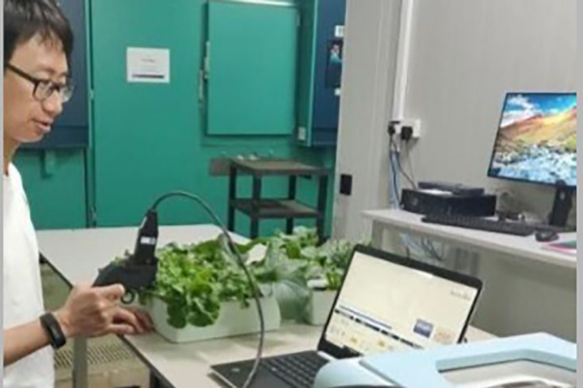 Portable device for fast detection of plant stress