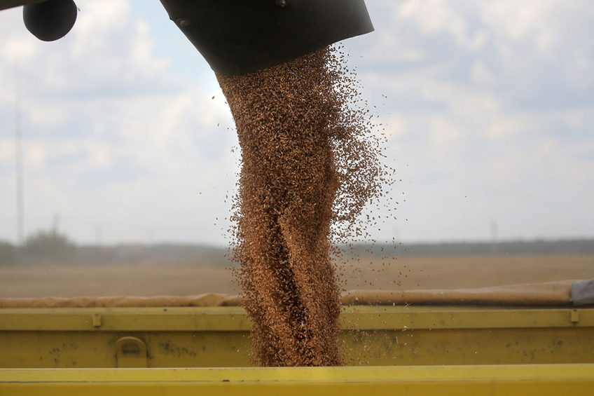 epa06148523 Wheat is filled into a lorry during wheat harvest in Pushkino village, outside Moscow, Russia, 17 August 2017. Russia is a leading wheat export nation. A report published by the US Department of Agriculture expects Russia to export around 30 million tonnes of wheat in 2017-18.  EPA/MAXIM SHIPENKOV
