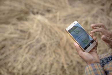 2017-12-27 14:31:50 This photo taken on December 27, 2017 shows a farmer using a mobile app while working in a rice field on the outskirts of Yangon. New smartphone apps are providing farmers with up-to-date information on everything from weather, climate change, crop prices to advice on pesticides and fertilisers.  / AFP PHOTO / YE AUNG THU / TO GO WITH Myanmar-agriculture-economy-technology, FEATURE by Athens ZAW ZAW