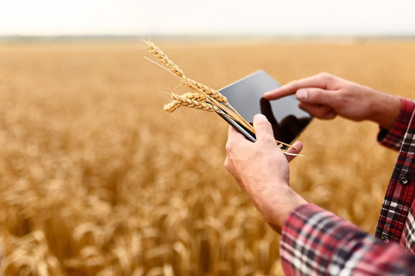 Smart farming using modern technologies in agriculture. Man agronomist farmer with digital tablet computer in wheat field using apps and internet, selective focus; Shutterstock ID 682729996; PO: AAF
