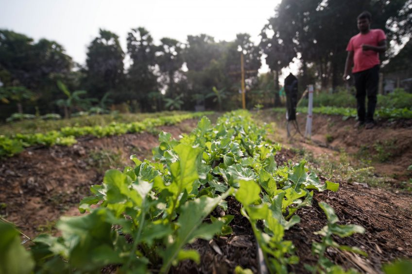 Micro-irrigation system could cut India's water use by 80%