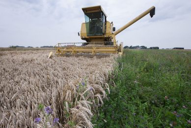 WUR: Strip cropping attracts pest combating insects