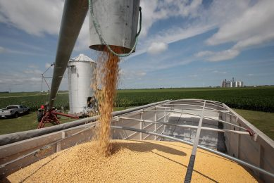 2018-06-13 00:00:00 DWIGHT, IL - JUNE 13: Farmer John Duffy loads soybeans from his grain bin onto a truck before taking them to a grain elevator on June 13, 2018 in Dwight, Illinois. U.S. soybean futures plunged today with renewed fears that China could hit U.S. soybeans with retaliatory tariffs if the Trump administration follows through with threatened tariffs on Chinese goods.   Scott Olson/Getty Images/AFP == FOR NEWSPAPERS, INTERNET, TELCOS & TELEVISION USE ONLY ==