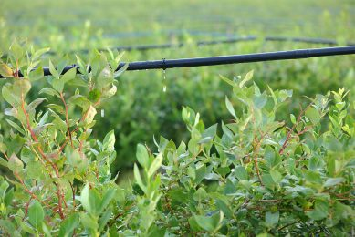Drip irrigation definitely viable for large farms
