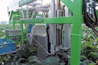 Tumoba developing robotic broccoli harvester