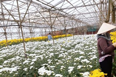 BASF light stabiliser to increase greenhouse crop yield