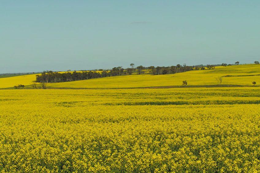 Lack of mobile coverage holds Australian farmers back