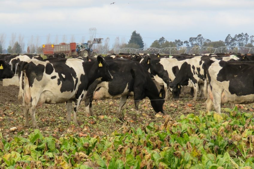 Beet crops driving changes