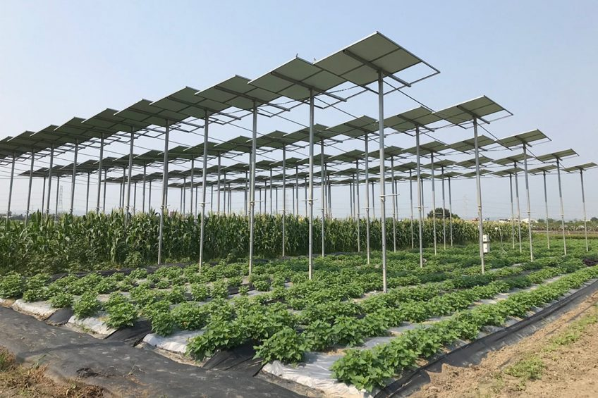 Report: Taiwan prime target for agtech exporters