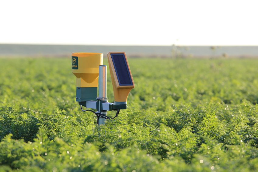 Rapid adoption of artificial intelligence in agriculture