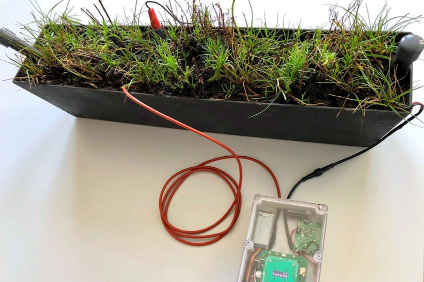 First plant-powered sensor sends signal to space