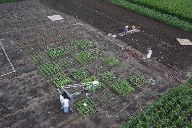New insights about photosynthesis could improve crop yields