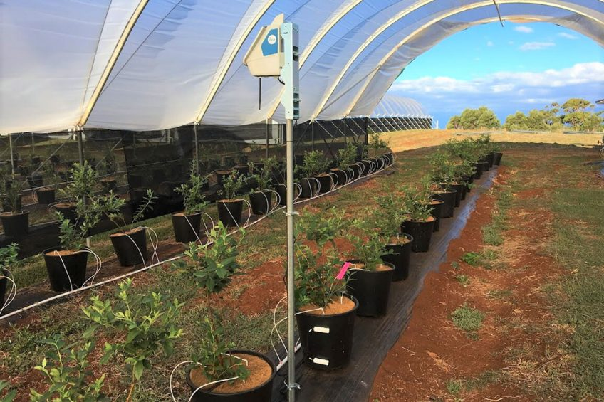 Technology to change the way horticulture is managed