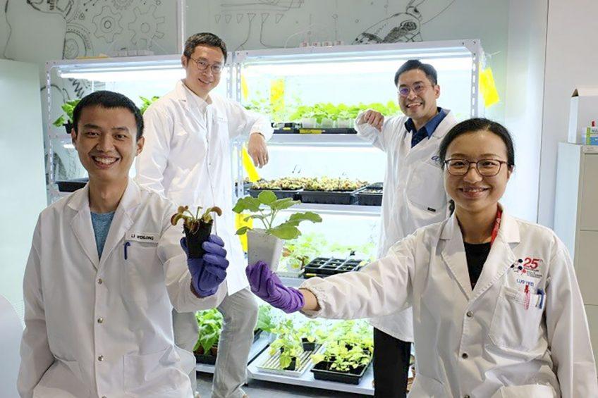 Photo: Nanyang Technological University