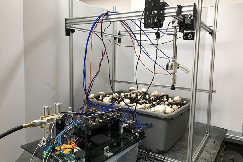The prototype was designed to automatically pick and trim button mushrooms growing in a shelf system. - Photo: Penn State