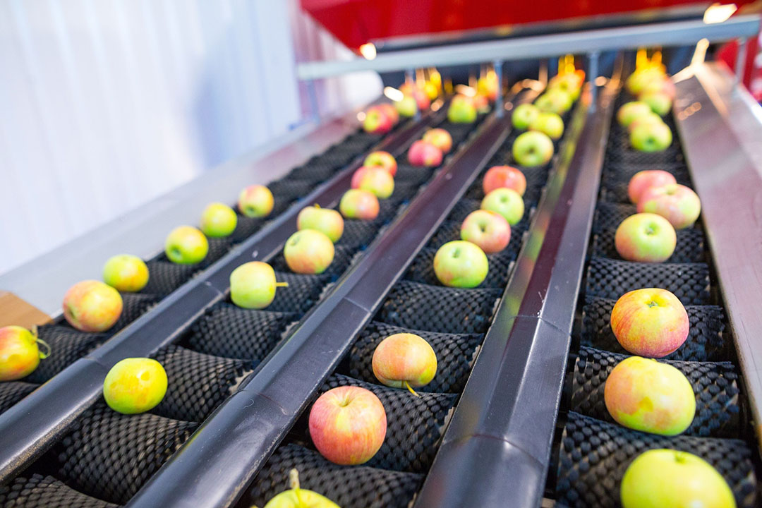 Not too long ago it was difficult to be able to store apples for a long while. Now, however, apples can be stored for well over six months. - Photo: Canva