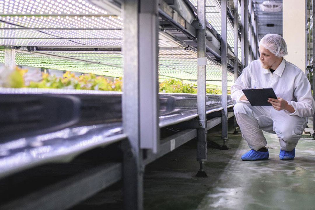 Intelligent cameras recognise the growth stage and height of vegetables. Photo: Imaging Development Systems