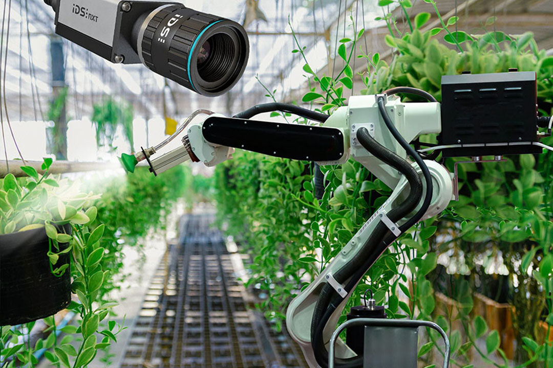 AI can help identify damaged plants and determine the optimal harvest time. Photo: Imaging Development Systems