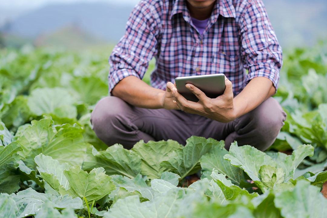 The use of climate monitoring technology is also being used to ensure that produce that is produced for export markets meets the relevant standards. - Photo: Canva