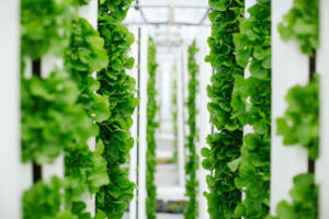 The light demands, crop cycle time and plant architecture make leafy crops very amenable to production using vertical farms. - Photo: Bayer
