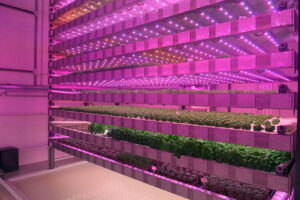 Vertical farming system of the French start-up 'Jungle' in Chateau-Thierry, eastern of Paris. - Photo: Eric Piermont / AFP